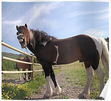 Yawning horse Poster