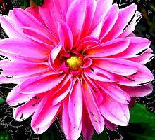 floral 1423 by Chuck Landskroner