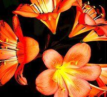 floral 6019 by Chuck Landskroner