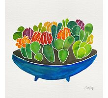Painted Succulents Photographic Print