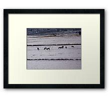 Field Framed Horses Framed Print