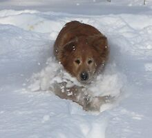 Valkyrie Snow Plow Pup 09 by goldnzrule
