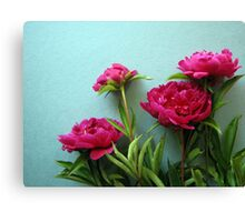 bunch of pink peony flowers against blue background Canvas Print
