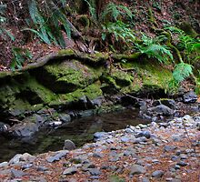 Mt. Tam Creek by stevenjay