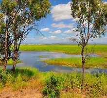 Townsville Common at its best by Geoff Beck