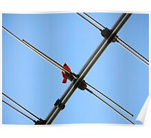 Redbird On A Wire Poster