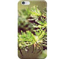 Evergreen Branch  iPhone Case/Skin