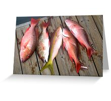 Yellow & Red Snapper  Greeting Card