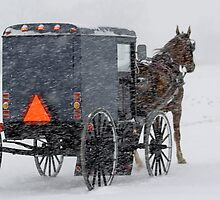 Horse and Buggy in the Snow by Mark Van Scyoc