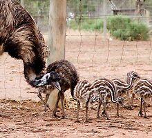 Emu Parade by Chris Nies