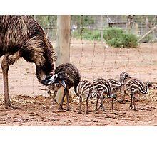 Emu Parade Photographic Print