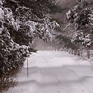 Snow Covered Road to the Garden by Monica M. Scanlan