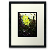 Ol' Daffodil Me. Framed Print