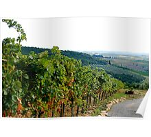 Vineyards on the Landscape of Tuscany Poster