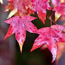 Fall Color by Christopher  Boswell