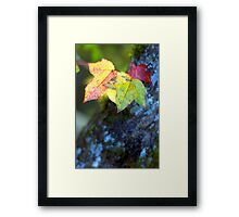 Leaves and Moss Framed Print