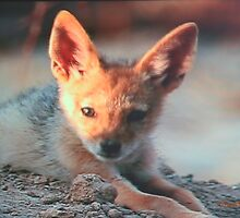 Baby Red Fox by Pam Moore