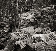 Fern Forest (B&W) by Yves Rubin