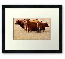 Cattle  Framed Print