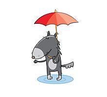 Wolf under an umbrella. Photographic Print
