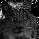 The Missing Lynx by Jon  Johnson
