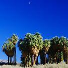 Desert Oasis Moonrise by Tori Snow