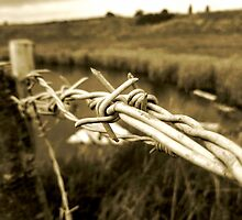 Barbed by Vicki Spindler (VHS Photography)