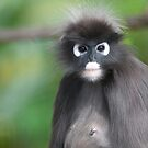 Dusky Leaf Monkey by Cathy Cormack