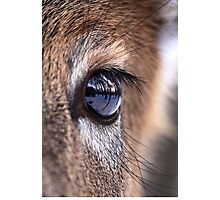 Now thats an eyefull! - White-tailed Deer Photographic Print