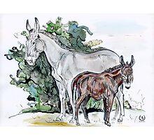 """Donkey's family"" Photographic Print"