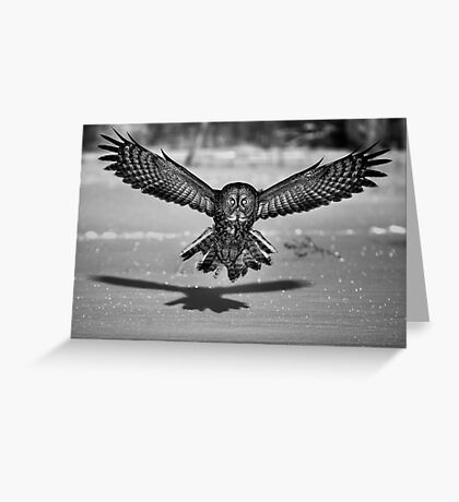 Great Grey Owl B&W Greeting Card