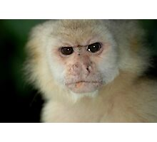 Capuchin Monkey in Panama Photographic Print