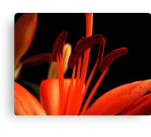 Red Lily macro. Canvas Print