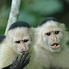 Capuchin Monkeys in Panama by Marieseyes