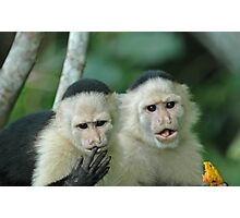 Capuchin Monkeys in Panama Photographic Print