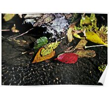Leaves in a Stream Poster
