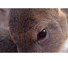 deers eye Photographic Print