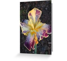 Japanese Iris Greeting Card