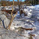 Rock Hollow Springs - - HDR by Dennis Jones - CameraView