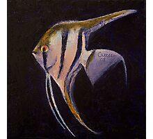 Angelfish Photographic Print