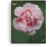 Two-tone carnation Canvas Print