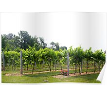 SOUTHERN INDIANA VINEYARDS Poster