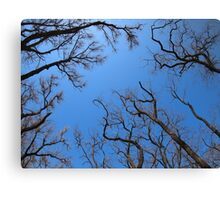 Dead trees in the environmental catastrophe Canvas Print