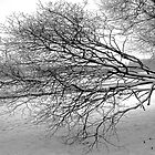 Tree in Winter - Hogganfield Loch, Glasgow, Scotland by simpsonvisuals