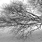 Tree in Winter - Hogganfield Loch, Glasgow, Scotland by simpsonvisuals