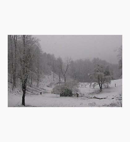 Horses By Apple Tree Snow Scene Photographic Print