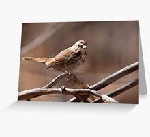 Song Sparrow Cropped Greeting Card