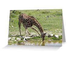 Giraffe drinking at Etosha, Namibia Greeting Card