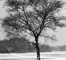 Lone Tree in Winter Landscape, Scotland, UK by simpsonvisuals