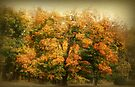 Autumn Color by Sandy Keeton